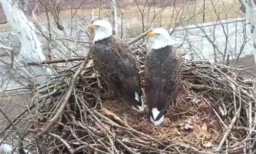 hays eagle nest cam
